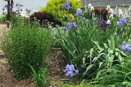 Garden 5-web.jpg